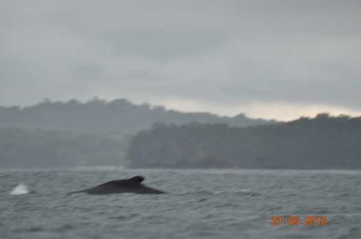 whale & spray